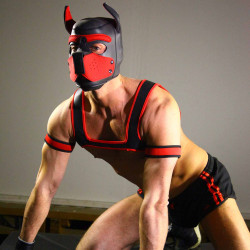 RudeRider Neoprene Harness Black/Red (T7254)